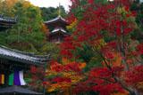 今熊野観音寺 紅葉の医聖堂