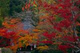 紅葉の今熊野観音寺大師堂