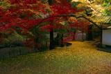 今熊野観音寺 京都で最も赤いモミジ
