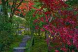 紅葉越しの光悦寺茶室