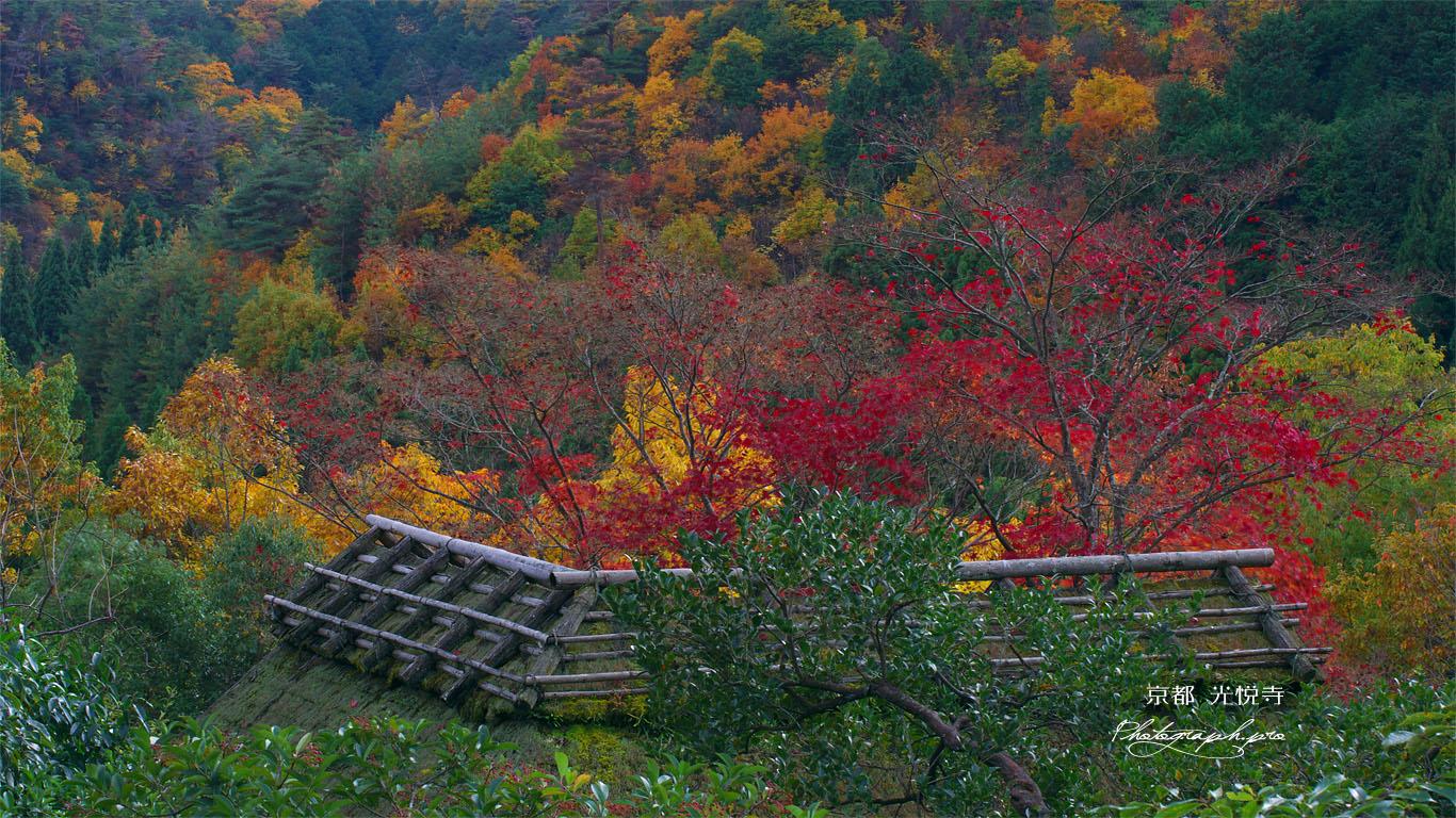 鷹ヶ峯の紅葉 壁紙