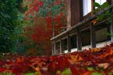 光悦寺本堂の散り紅葉