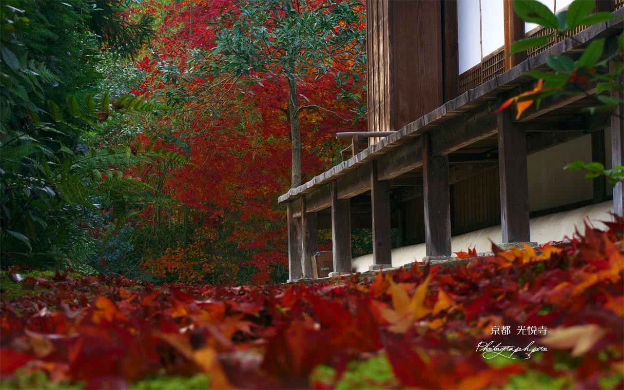 光悦寺本堂の散り紅葉 壁紙