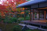 源光庵 客殿と庭園の紅葉