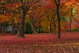 東福寺洗玉澗庭園の紅葉