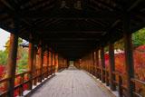 東福寺「通天」の扁額と紅葉の歩廊