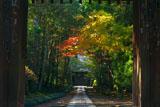 寿福寺 総門越しの紅葉の参道