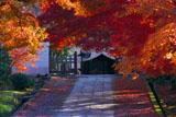 養源院参道の紅葉