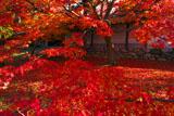 紅葉と養源院勅使門