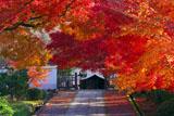紅葉と養源院庫裡入口