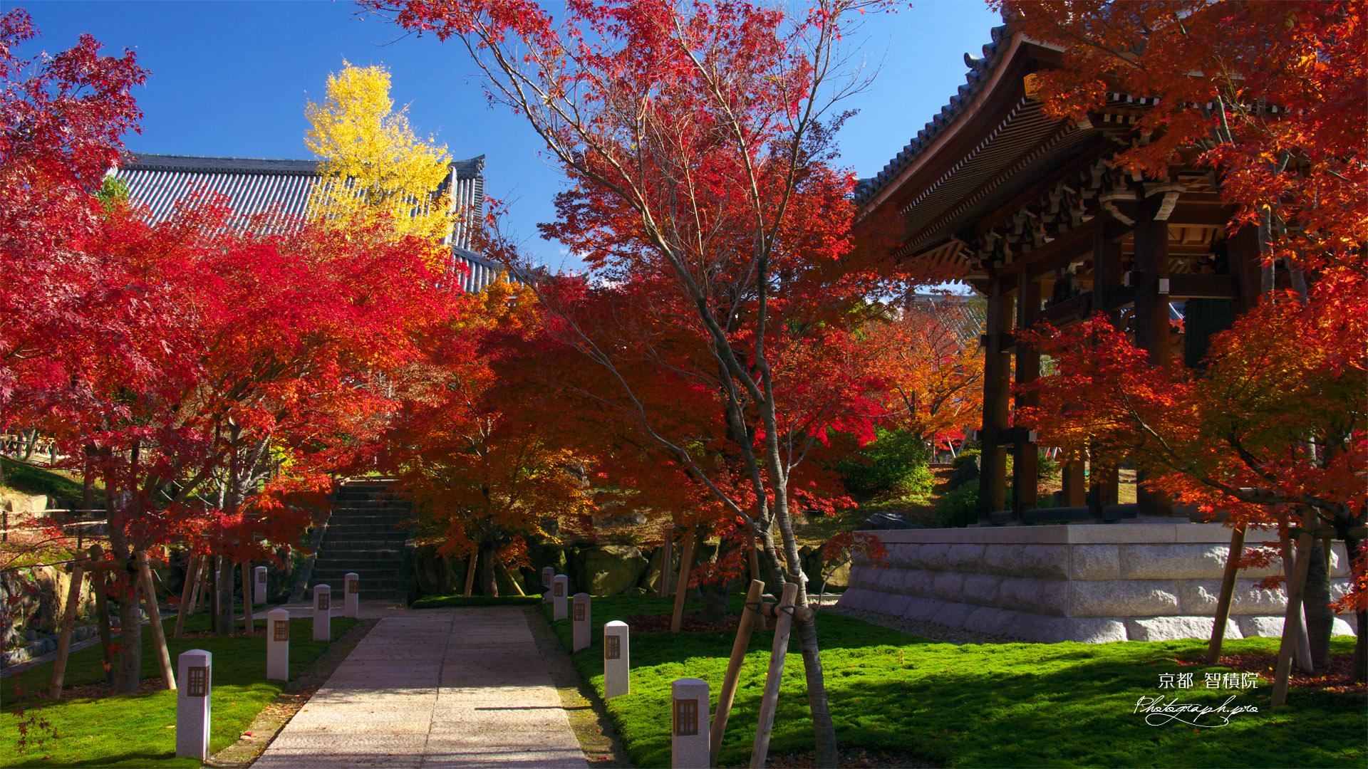 智積院鐘楼付近の紅葉