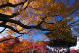 紅葉の清水寺子安塔