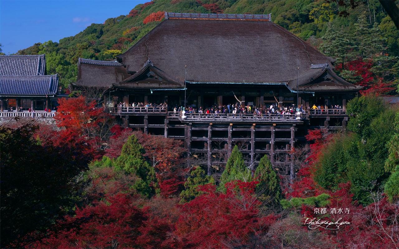 清水寺錦雲渓の紅葉と本堂 壁紙