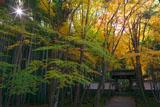 京都地蔵院の青紅葉
