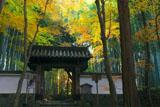 京都地蔵院の総門と竹林