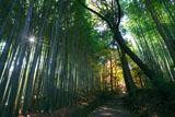 京都地蔵院の竹林の参道