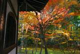 京都地蔵院(竹の寺)の地蔵堂と紅葉