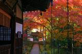 京都地蔵院(竹の寺)の本堂と中門