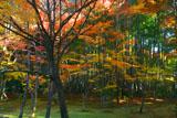 京都地蔵院(竹の寺)の中庭の紅葉