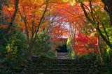 京都浄住寺の石段と紅葉