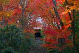 紅葉と京都浄住寺本堂