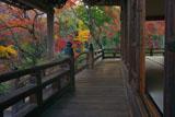 宝筐院 本堂と紅葉の庭園