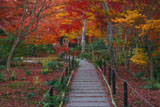宝筐院 庭園の紅葉