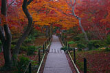 宝筐院 錦秋の庭園