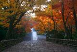 龍安寺 参道の紅葉