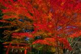 大田神社 紅葉と鳥居
