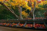 板塀瓦の散り紅葉