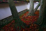 大徳寺高桐院楓の庭の散り紅葉