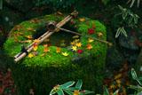 大徳寺高桐院楓のつくばい