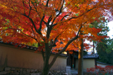 大徳寺 正受院門前の紅葉