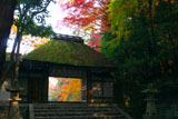 木漏れ日射す法然院山門と紅葉