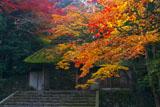 紅葉の法然院山門