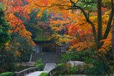 紅葉の法然院