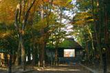 法然院参道の黄葉