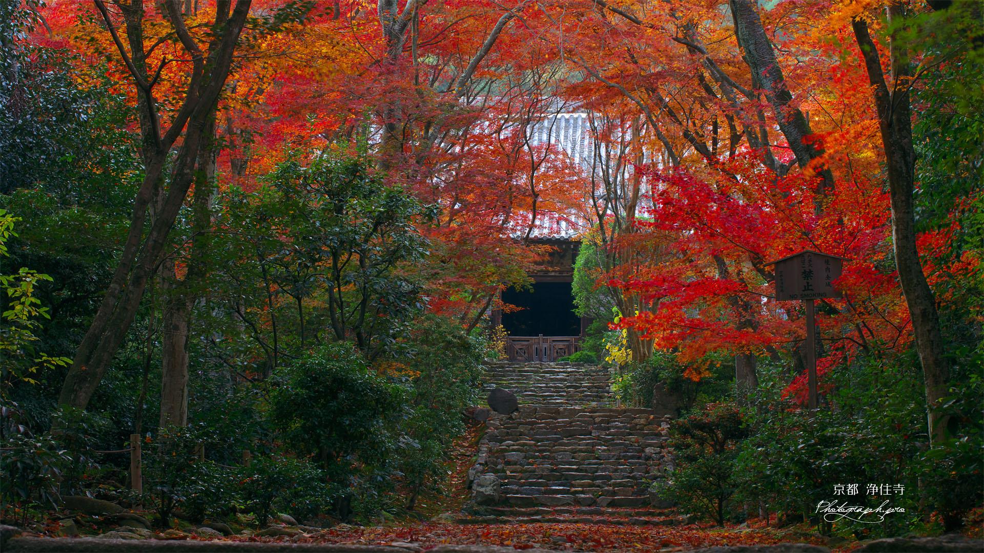 京都浄住寺の参道と紅葉