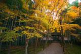 京都地蔵院(竹の寺)の紅葉と竹林