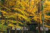 京都地蔵院(竹の寺)の総門と楓の黄葉