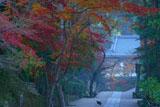 円覚寺参道の猫