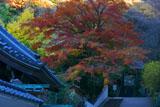 六国見山の紅葉