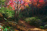 鎌倉 獅子舞の紅葉