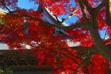 紅葉と建長寺法堂