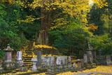 妙本寺 敷銀杏と供養塔