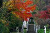 杉本寺参道の紅葉