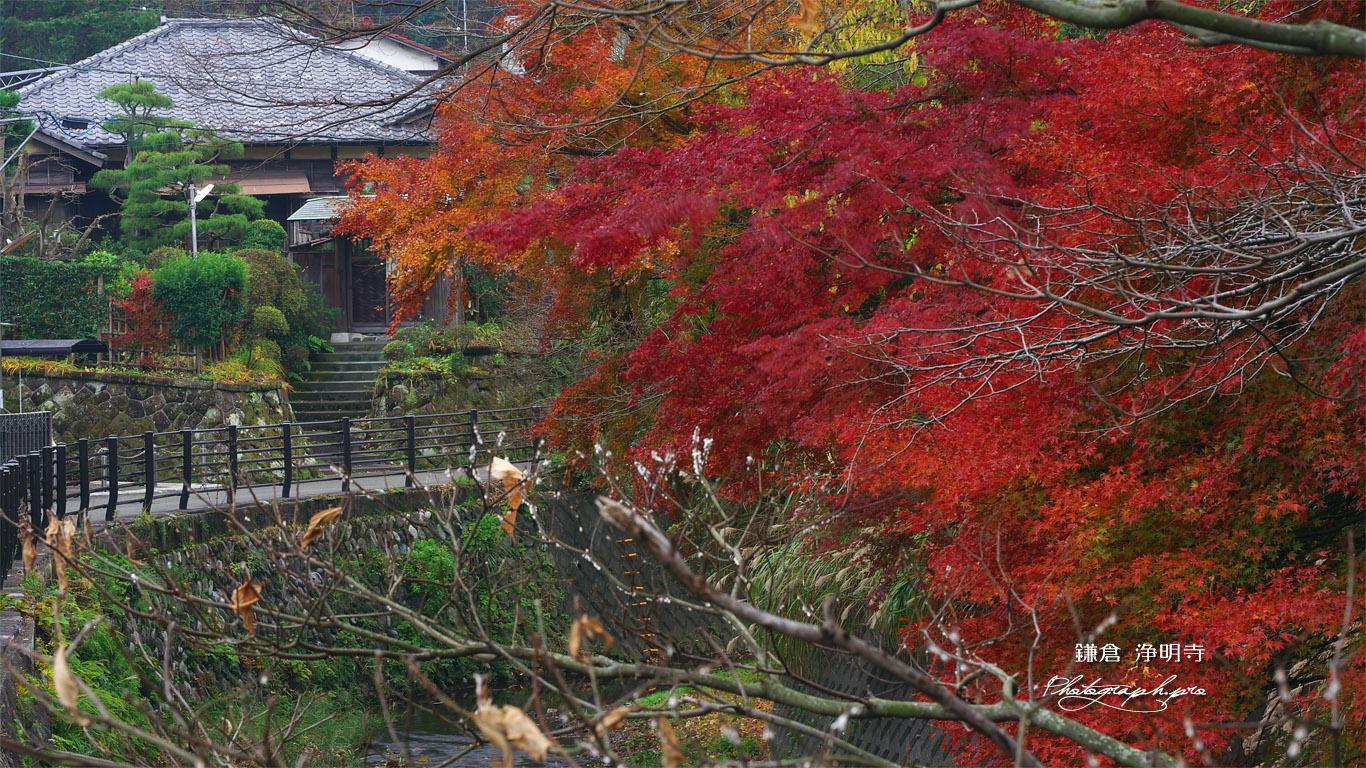 鎌倉 滑川沿いの紅葉 壁紙