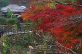 鎌倉 滑川沿いの紅葉