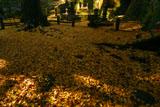 東慶寺 銀杏敷黄葉と歴代尼僧墓